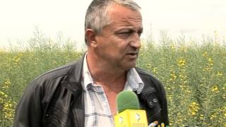 EURALIS SEMENA_Agroforum TV 19.05-26.05.2012_Winter Oilseed Rape in Zlatna Niva