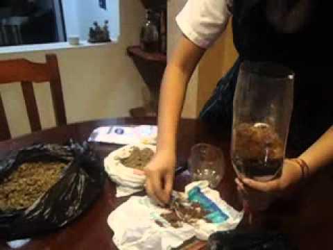Purificacion Del Agua  YouTube