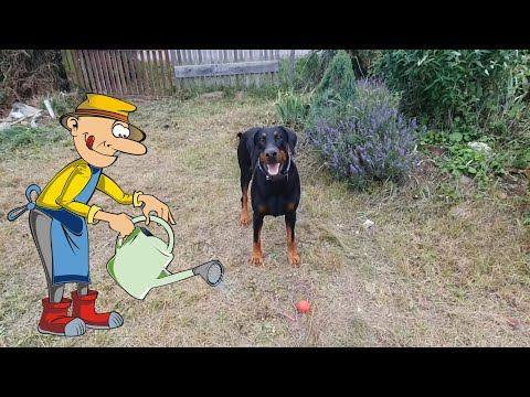 Zack Dogdance-Training: Abbau von Handhilfenиз YouTube · Длительность: 2 мин12 с