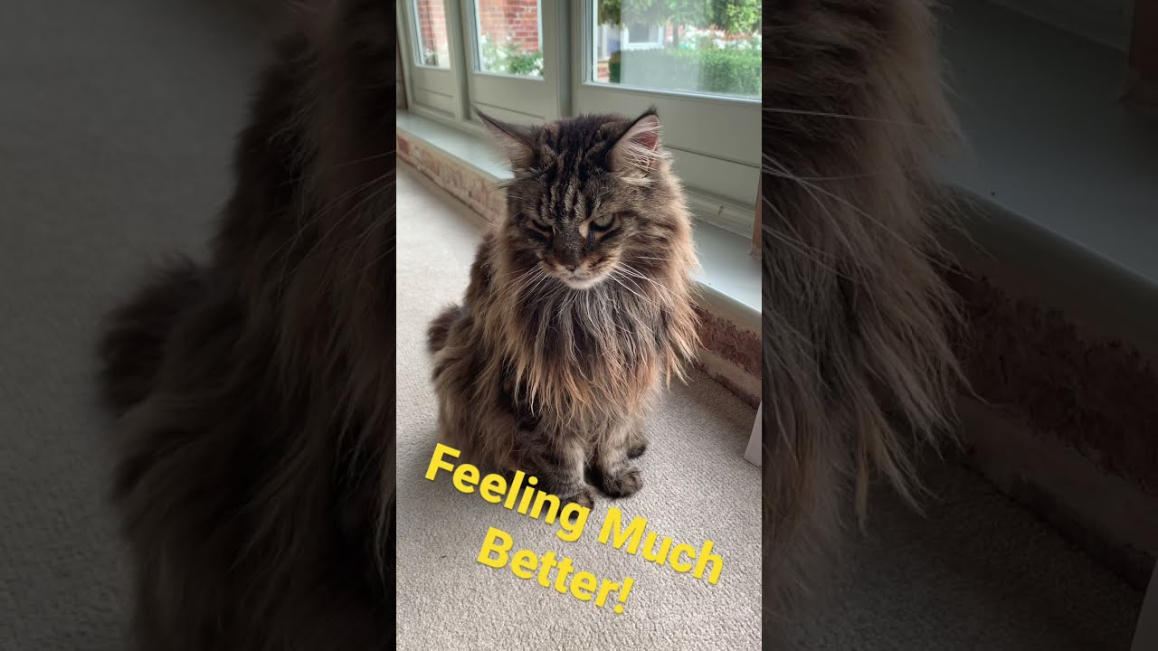 My Cat Is Sick: Day 2 UPDATE
