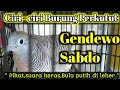 Burung Perkutut Gendewo Sabdo Ciri Cirinya  Mp3 - Mp4 Download