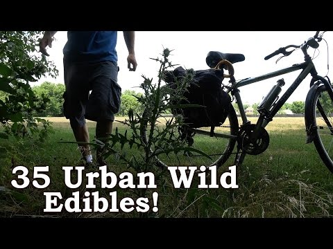 Urban Foraging For 'Wild' Edibles - 35 North American Species