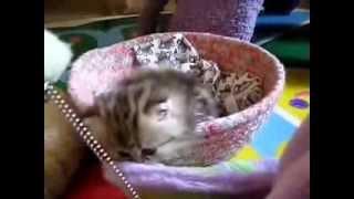 Смешные кошки, сладкие котята. Funny cats, sweet kittens