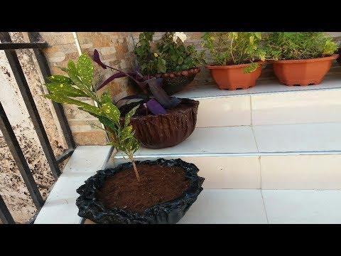 طرق عجيبة ورخيصة لصنع عدد كبير من الاصص او فازات لزرع النباتات