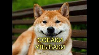 Собаки улыбаки 20 фото  Жизнь любит тех, кто ей улыбается!