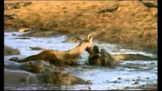Repeat youtube video PARQUE NACIONAL DE SERENGETI