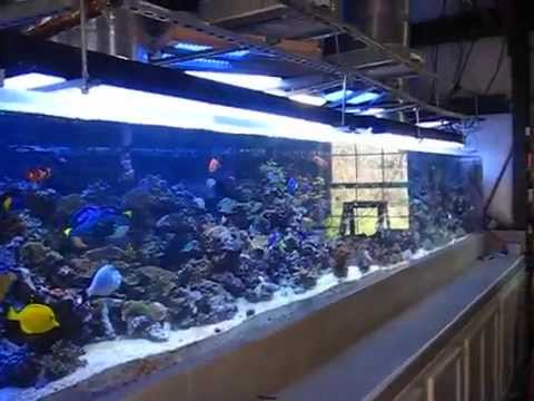 1200 Gallon Reef Aquarium With 3 Solatubes Youtube