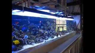 1200 gallon reef aquarium with 3 Solatubes