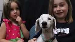 The Jacksonville Dog Cafe -- Jacksonville, FL