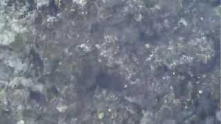 Рыбы плавают на рифе, видео с понтона на пляже (00014)