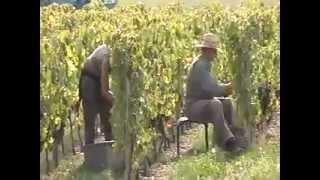 Grape Harvest in the French Alps  (pre-HD camera)