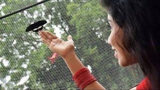Download Projapoti Ei Mon_Shreya Ghoshal MP3 song and Music Video