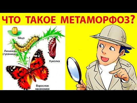 Что Такое Метаморфоз? Шарман Эпт Рассел. What is Metamorphosis?
