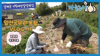 일선 공무원 마늘 농활  VLOG~!!