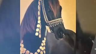Фото-портрет лошадей.