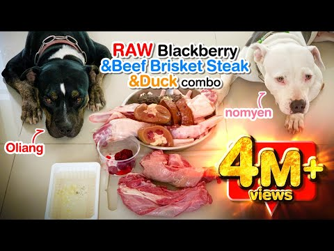 pit-bulls-eat-raw-blackberry-beef-stripe-loin&duck-neck-combo-[asmr]- -barf- -mukbang-犬が生の肉を食べる- -4k