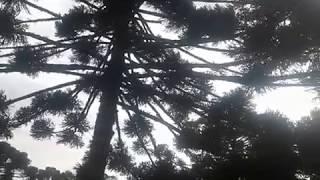 Ventos fortes em São Francisco de Paula (RS)