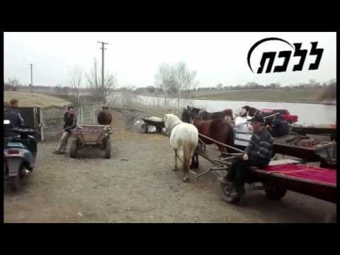 "Chasidim Dance ""Mincha"" With Goy In Anipoli, Ukraine"