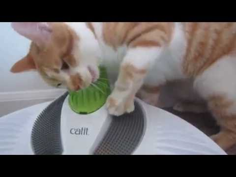 Gatsby the cat and the Catit Senses 2.0 Wellness Center