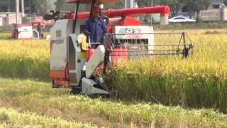 Rice kubota combine  harvester in indina and china