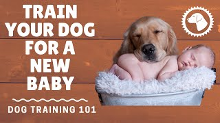 How To Train A Dog For A New Baby | DOG TRAINING 🐶 Brooklyn's Corner