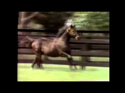The Maryland Million: 1986 Broadcast