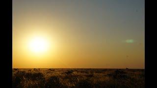 Animals of Namibia: Part IV