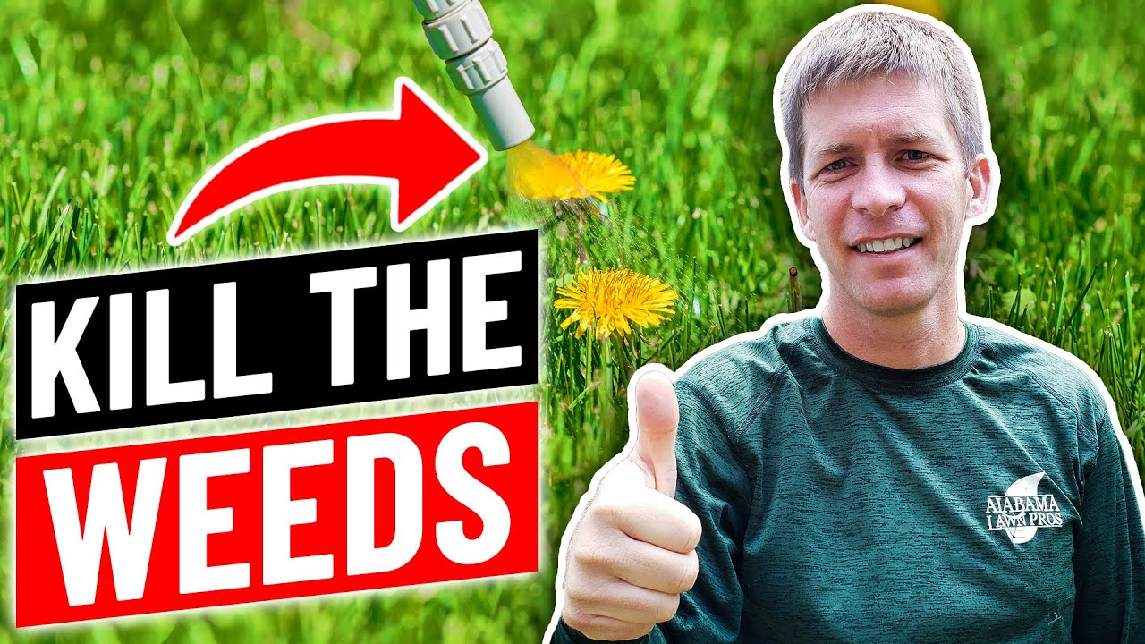 How To Kill Weeds In Your Lawn Cheap Youtube