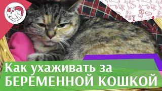 5 правил ухода за беременной кошкой на ilikepet