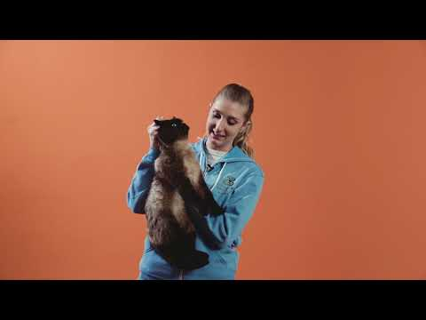 How to scruff a cat