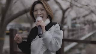 [충남보령문화예술거리 BUSKING ZONE]주산 벚꽃…