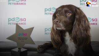 Dog Who Fell Down A Dam Wins A Special Award