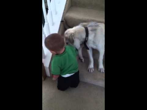 5 Month Old Anatolian Shepherd Keeps Baby Boy Off the Stairs