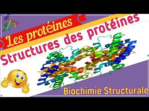 La Définition et Les Structures des Protéines