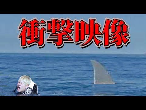 【閲覧注意】海水浴中に巨大サメに遭遇しました。【ノンラビ】【shark】【煽り運転】