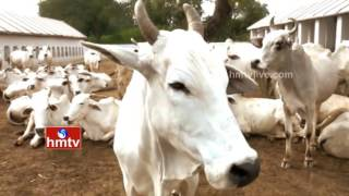 All India Horticulture And Agriculture Expo In Hyderabad | Animal Husbandry Dept | Nela Talli | HMTV