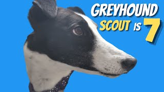 Our Greyhounds 7th Birthday