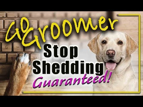 How to stop your dogs from shedding-guaranteed.