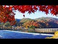 あらしやま〜京の恋唄〜 / 金田たつえ Cover:山口えい子