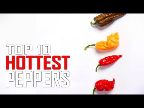 Top 10 World's Hottest Peppers in the WORLD!Is Ghost Pepper #1?