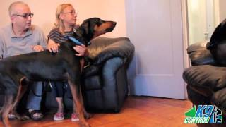 Personal Protection,doberman Pinscher And His Family K9 Control Tv