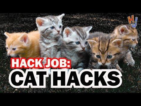 cat-hacks,-hack-job-#6