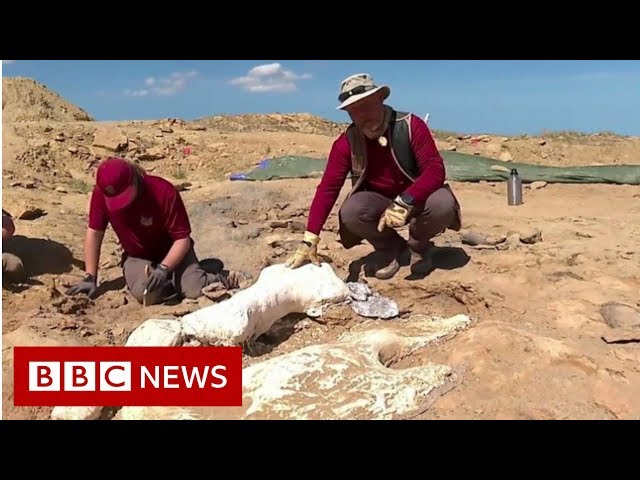 Treasures of a dinosaur hunt - BBC News