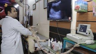 بالفيديو- داخل عيادة طبيب بيطري.. لماذا يقتني المصريون حيوانات أليفة؟