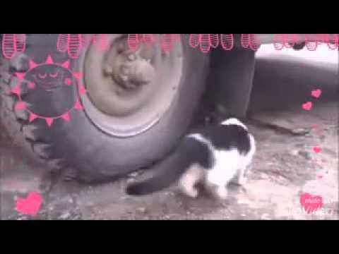 ♡ Rat Escapes From Cat ♡ - KAWAII