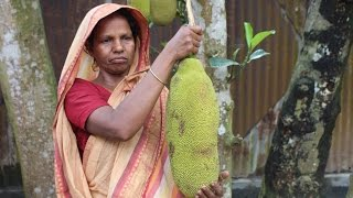 Village Food | Jackfruit recipe | Grandmother recipes-42
