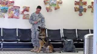 K-9 Dog, Police Dog, George Bush Airport, Houston, Texas, United States, North America