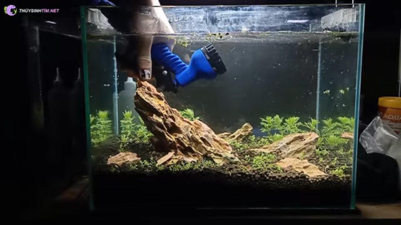 Hướng dẫn set up bể thủy sinh Mini cực đẹp