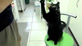 Black Cats are Pawsome! thumbnail