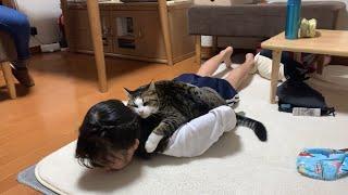 娘にスリスリしたくて追いかけ回す猫
